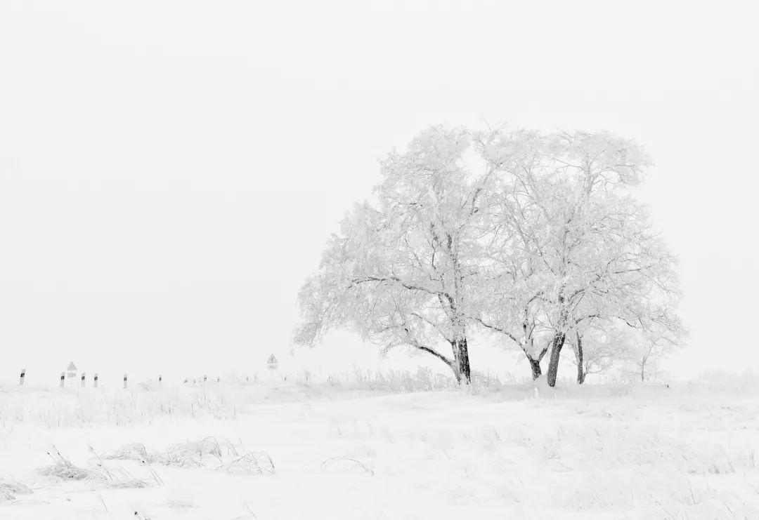 傲雪寒梅为君开,东方艺术的魅力,或许就在于